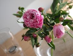 syyskuunkuudes Pionit // Peonis and Marimekko Urna-vase perfect match