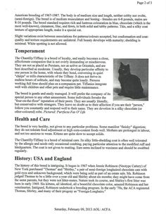 Interesting Information, Cat Breeds, Cats And Kittens, People, Cat, Cats, People Illustration, Folk