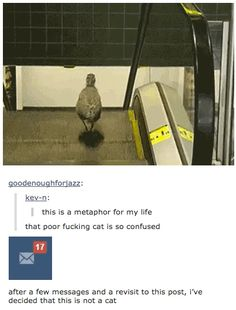 21 Times Tumblr Told The Truth About Cats. I don't care for cats, but this is pretty hilarious