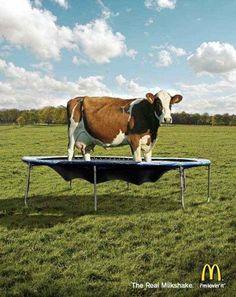 Sterk beeld, heeft ook een educatief karakter. Veel stadskinderen weten namelijk niet dat melk afkomstig is van een koe. Goede  en grappige reclame van Mc Donalds.