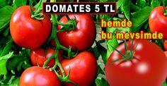 Bu mevsimde Domates 5 TL http://www.habertuar.com/ekonomi/serada-urun-azaldi-domates-yeniden-tirmanisa-gecti-h34409.html