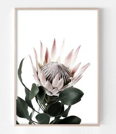 King Protea Art Print by Little Ink Empire. Protea Art, Protea Flower, Flower Wall, Flower Prints, Botanical Prints, Artwork Prints, Pink Flowers, Modern, Contemporary