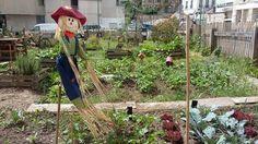Arcueil Ville Comestible - Jardin Partagé Cauchy - https://www.facebook.com/arcueilvillecomestible/