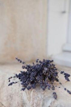 Lavender - Purple - Lace - Beige - Off-White - Caprina by Canus - Lavender Oil