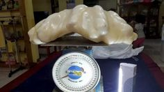At 34 kilograms (75 pounds), this is the largest pearl ever recorded - and the Filipino fisherman who discovered it kept it hidden beneath his bed for ten years. It was discovered earlier this year...
