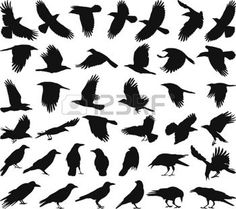 the crow: black isolated vector silhouettes of carrion crow on the white background