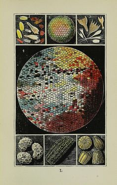 Magnified butterfly wing, wing scales, eye and eggs    London :George Routledge and Sons,1894.