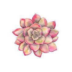 Succulents Drawing, Watercolor Succulents, Watercolor Flowers, Watercolor Paintings, Succulents Art, Succulents Wallpaper, Indoor Succulents, Propagating Succulents, Planting Succulents