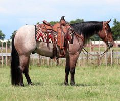 American Quarter Horse, Horse Tack, Beautiful Horses, Beautiful Pictures, Animals, Life, Pretty Horses, Animales, Animaux