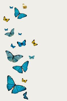 Download premium psd / image of Vintage Common Blue butterflies illustrations with a copy space by Chayanit about butterfly, black borders, butterfly background, animal, and art 2287172