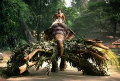 Kerala, south India....Heard wonderful things about Kerala....would love to go there!