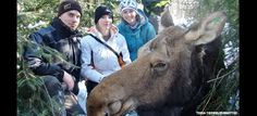 Student researchers aim to save declining moose population (October 30, 2013 issue)