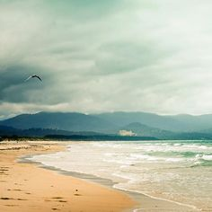 Seagulls Beach photography   fine art photography print