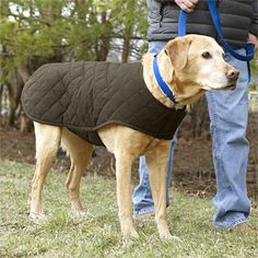 Just found this Quilted Dog Jacket - Quilted Waxed-Cotton Dog Coat -- Orvis on Orvis.com!