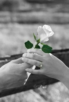 Beautiful Roses, Beautiful Hands, Life Is Beautiful, Splash Photography, Black And White Photography, Butterfly Flowers, Love Flowers, Mains Couple, White Roses
