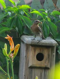 Tips on planting a backyard wildlife garden. PERFECT for Earth month AND for my future home! :-)