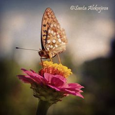 Butterfly  Fine Art Photography  butterfly by BlossomingDream #Photography #butterfly #macro