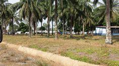 Scene in Sierra Leone
