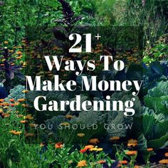 Hydroponic Gardening Ideas Wondering how to make money gardening? Get started here with over 20 ideas for gardening for profit from home. Ideas for earning an income from your home garden beyond selling produce at the farmer's market. Hydroponic Gardening, Organic Gardening, Gardening Tips, Texas Gardening, Flower Gardening, Vegetable Gardening, Container Gardening, Garden Nursery, Plant Nursery