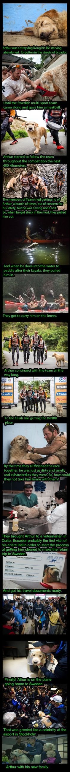 Meet Arthur, The Stray Dog That Became A Huge Celebrity. . . #heroes . . #compassion . . #rescue