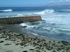 Seals are such funny creatures. I love watching them make their way back into the water at La Jolla Cove