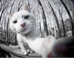 Selfie with a fisheye lense
