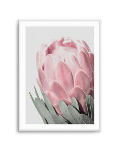 Beautiful blush and muted tones in this Queen Protea; the perfect modern Australian botanical Queen Protea art poster for your home interior. Style up this framed design with one of our eucalyptus posters to tie your home interior together. Protea Art, Protea Flower, Framed Artwork, Wall Art Prints, Poster Prints, Posters, Blue Flower Wallpaper, Peony Print, King Art