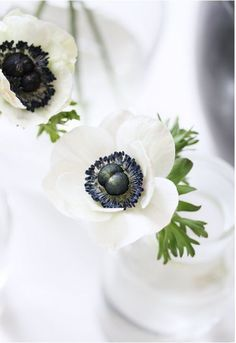 White Anemone, White Flowers, Pansies, Daffodils, Solomons Seal, Summer Fresh, String Of Pearls, White Cottage, Botanical Flowers