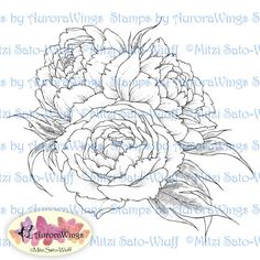 A bouquet of luscious peony