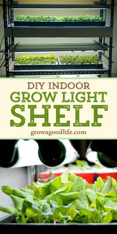 Growing Vegetables Indoors, Growing Microgreens, Herbs Indoors, Growing Herbs, Spring Vegetable Garden, Indoor Vegetable Gardening, Herb Garden, Garden Tips, Garden Projects