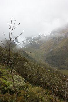 Best hiking New Zealand Tui Trip and Rimu Trip #newzealandhikes #tuitrip #rimutrip Routeburn Track