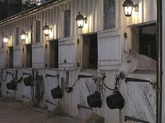 The lights above the stall. Good idea outside of the barn so the horse can see outside and then I would put gaits around each stall so I could let the horse out but into its own little grassed area. Dream Stables, Dream Barn, Campolina, Equestrian Stables, Horse Stalls, Barn Stalls, Horse Ranch, Horse Property, Farm Barn