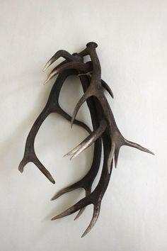 I Gigi in Hove, England - Remodelista Macabre Decor, Log Home Interiors, Traditional Witchcraft, Animal Bones, Deer Antlers, Deer Heads, Oh Deer, Cabins In The Woods, Antlers