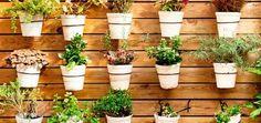Numerologia da Casa – o que o número da sua casa ou apartamento atrai - WeMystic Brasil Feng Shui, Cool Diy Projects, Home Projects, Green Fields, Organic Gardening, Home Remedies, Planter Pots, Diy Wedding, Herbs