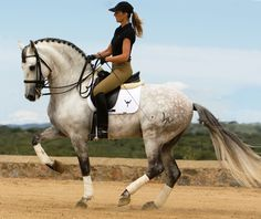 forests-in-neverland:lu-dressage:  Guardadamas   Ridiculous This horse is…