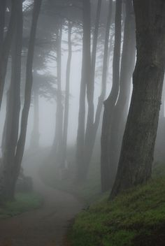 fog in the woods Foggy Forest, Misty Forest, Forest Fairy, Dark Forest, Mabon, Cthulhu, Belle Photo, Aesthetic Pictures, Nature Photography