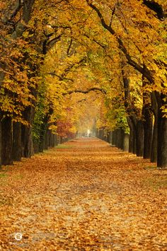 tunnel by Krisztian Fodor  #yellow