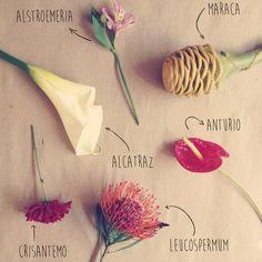 La cultura de las flores #flores #flowers #letitflow #flow #flowerculture #alcatraz #crisantemo #alstroemeria #anturio #leucospermum #mexico #floresadomicilio #love #cool