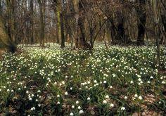 Gyöngyvirág Tanösvény: A májusban nagy tömegben nyíló virágról kapta nevét. A Szárhalmi erdő élővilágát mutatja be. Az útvonalon 9 térképes tábla segíti az eligazodást. A Tómalom-fürdőtől induló 3,5 km hosszú tanösvény bejárási ideje 1-1,5 óra.