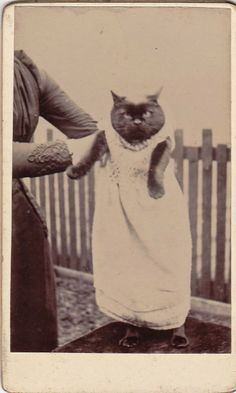 It's nice to know that even Victorian ladies liked to dress up their cats...