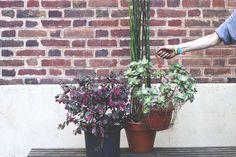 Plantes à domicile |MilK decoration