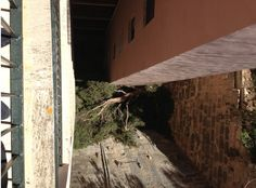 Pino de unos 6 metros se desploma sobre un edificio de Illetas. Nos han encargado a nosotros reparar los desperfectos causados por el mismo