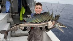 "Lancetfish (Alepisaurus)  Lancetfishes are large oceanic predatory fishes in the genus Alepisaurus (""scaleless lizard""). Lancetfishes grow up to 2 m (6.6 ft) in length. Very little is known about their biology, though they are widely distributed in all oceans, except the polar seas."
