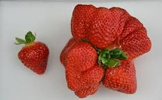 Image result for giant sized food