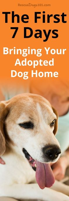 The First 7 Days – Bringing Your Adopted Dog Home. Are you ready to bring your new adopted dog home? The first 7 days with your  adopted dog is crucial for smooth transition, you must follow these steps... #dogadopt #dogadoption #adoptadog #dogstuff #cuteanimals #puppy #puppylove #adoptdontshop via @rescuedogs101