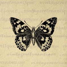 Painted-Lady Butterfly Graphic Digital Download Illustration Image Printable Vintage Clip Art. High resolution, high quality digital graphic for printing, iron on transfers, and other great uses. Real printable antique artwork. Antique artwork. This digital image is high quality, large at 8½ x 11 inches. Transparent background version included with every graphic.