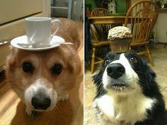 Voilà ce qui se passe quand des maîtres testent l'agilité de leur chien. Énorme !