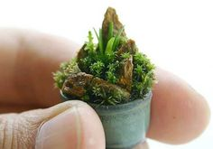 Miniature garden in a pot. Moss Terrarium, Terrarium Plants, Air Plants, Potted Plants, Ikebana, Mini Plantas, Micro Garden, Mame Bonsai, Moss Plant