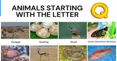 Animals that Start with Q Animals Starting With Q, Small Birds, Colorful Birds, Alphabetical List Of Animals, Continental Shelf, Red Bill, Visual Dictionary, Quokka, Largest Butterfly