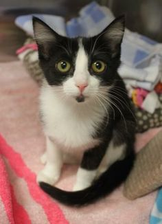 Meet Spot! available for adoption in Naperville, IL